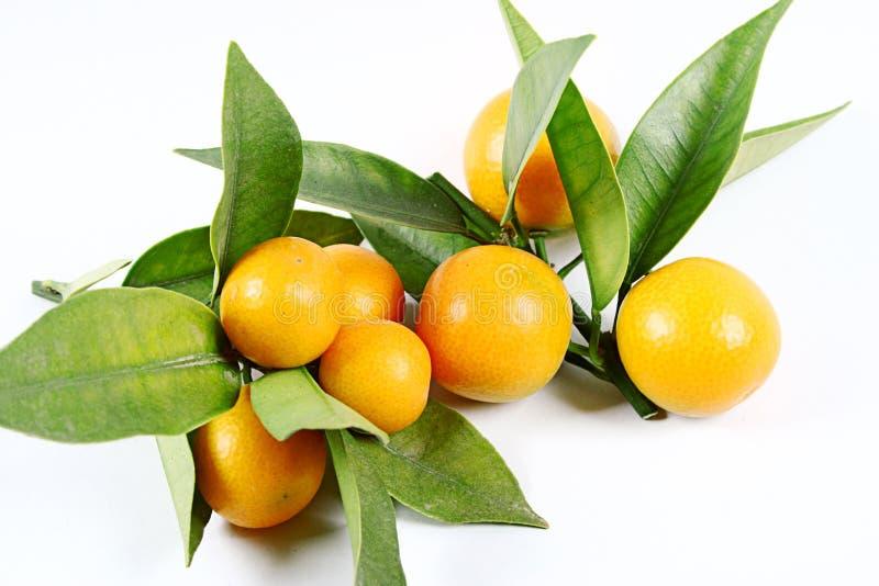 kumquat zdjęcia stock