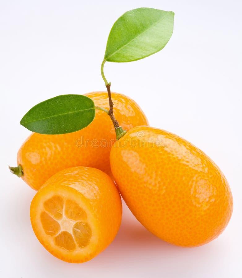 Kumquat imagenes de archivo