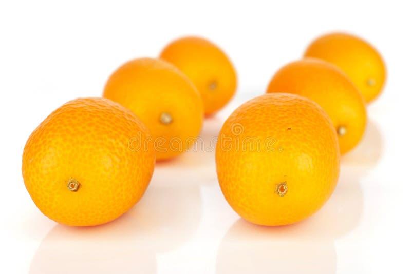 Kumquat alaranjado fresco isolado no branco foto de stock