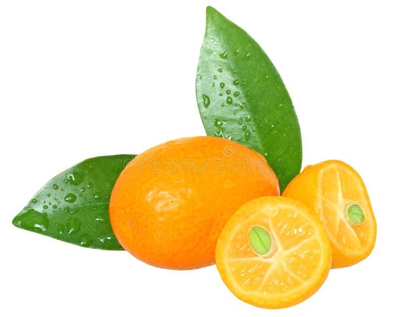 Kumquat cortado com fim da folha isolado acima. imagens de stock