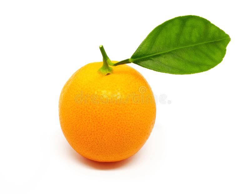 Kumquat do citrino isolado no branco foto de stock royalty free