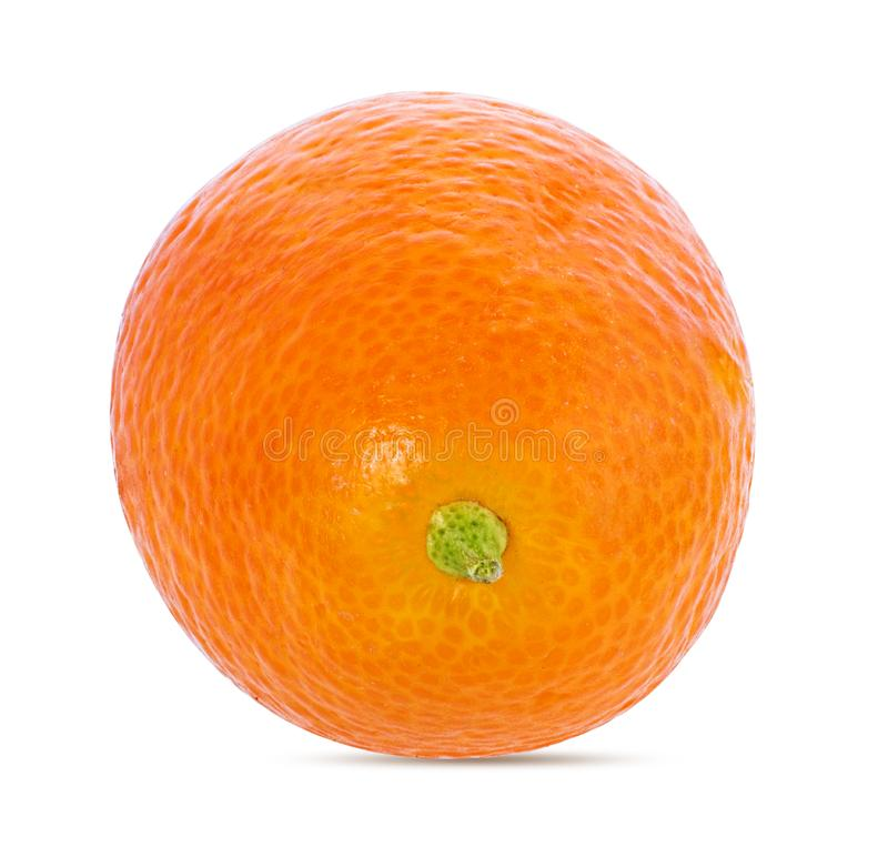 Kumquat isolado no branco foto de stock