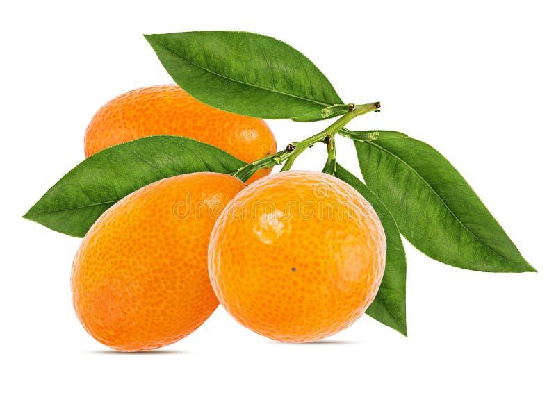 Kumquat isolado no branco imagens de stock royalty free