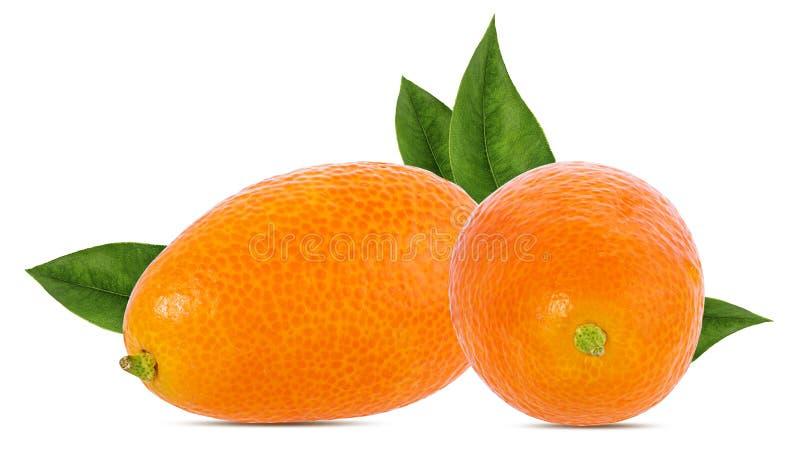 Kumquat isolado no branco imagem de stock