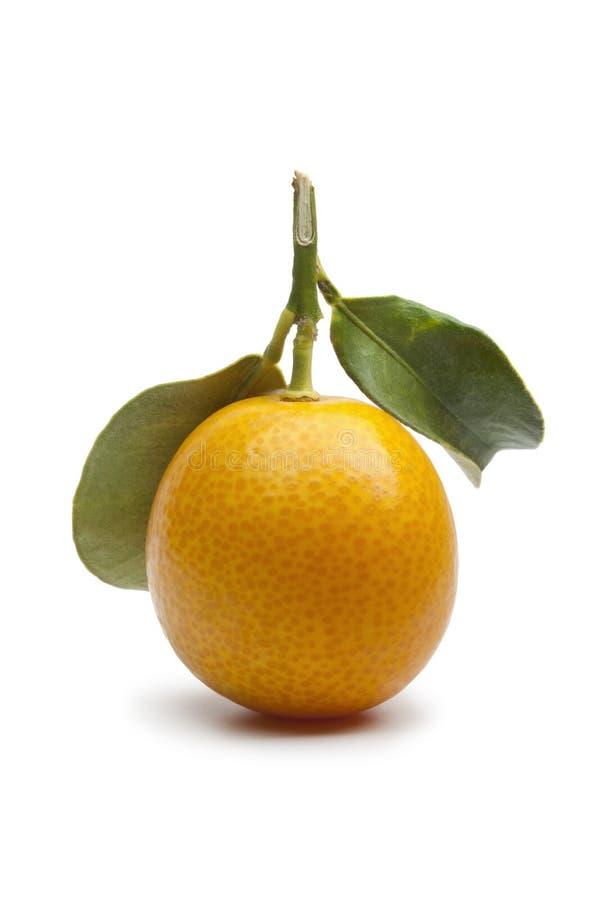 Kumquat redondo fresco fotografia de stock