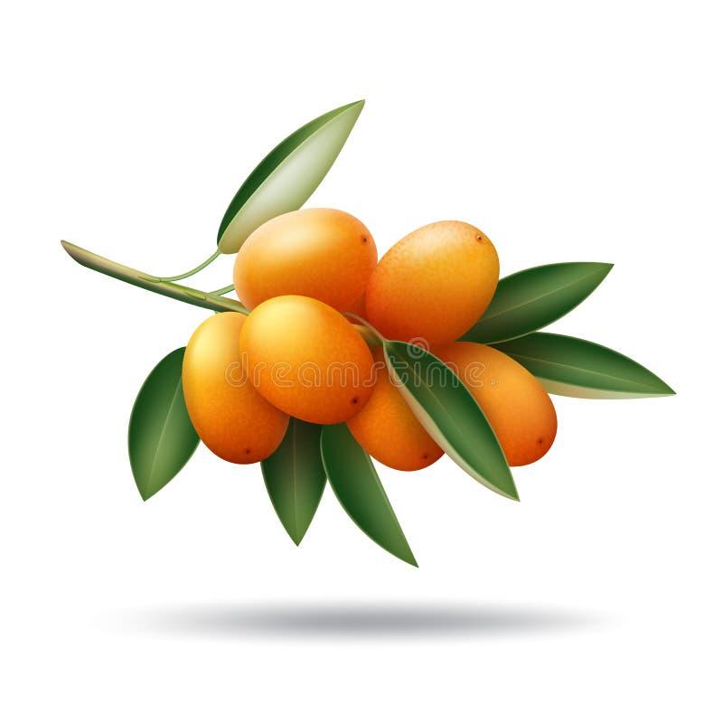 Kumquat tak met oranje vruchten en groene bladeren vector illustratie