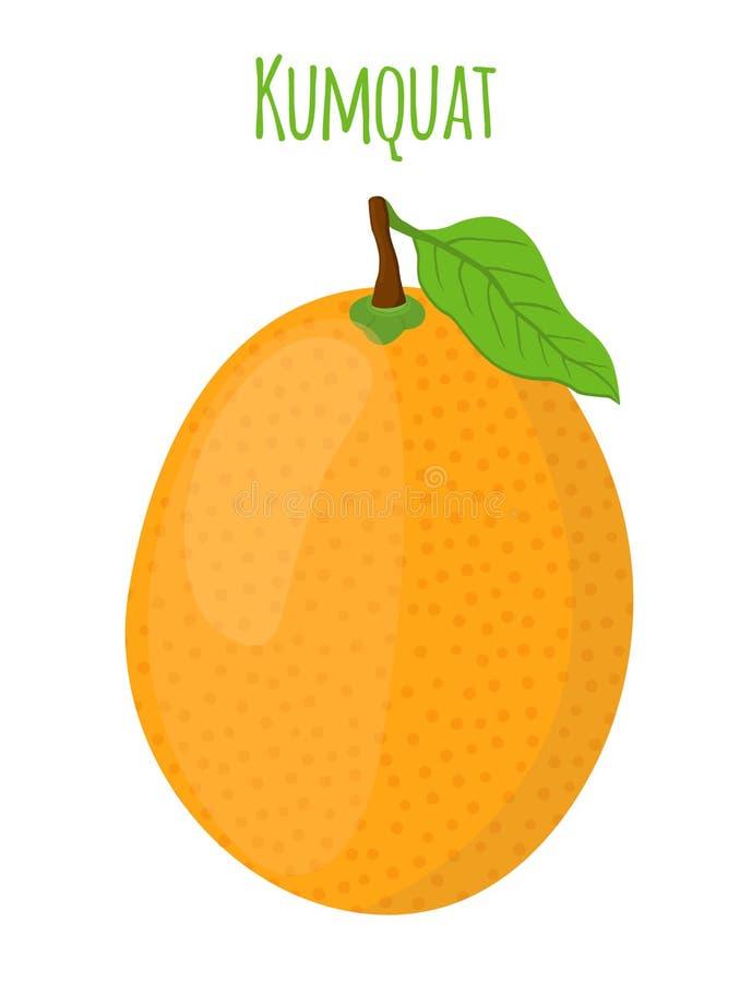 Kumquat tropical, fruta exótica Estilo plano de la historieta Ilustración del vector ilustración del vector