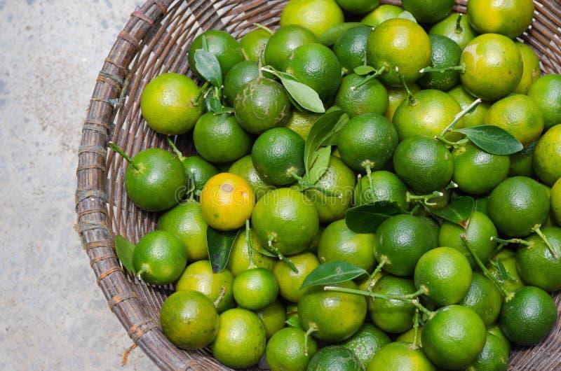 Kumquat verde na cesta imagem de stock royalty free