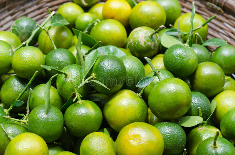 Kumquat verde na cesta imagens de stock