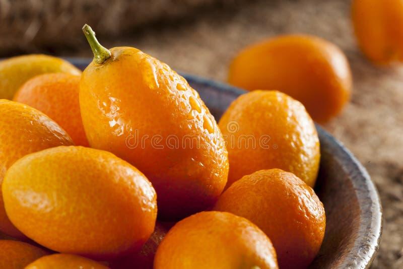 Kumquats crus orgânicos frescos fotografia de stock royalty free