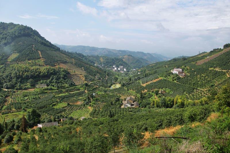Kumquatträd koloni och dalar nära Yangshuo, royaltyfri foto
