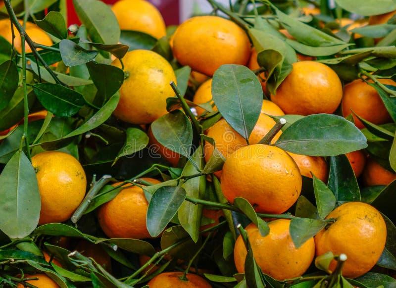 Kumquattr?d och frukter royaltyfri bild