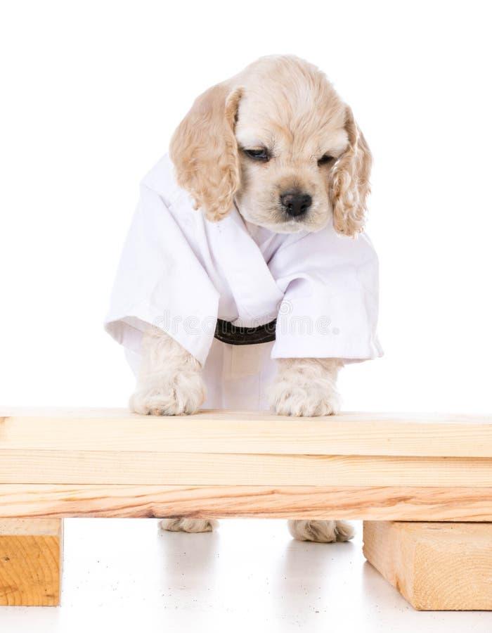 Kung-Fu-Hund lizenzfreie stockfotografie