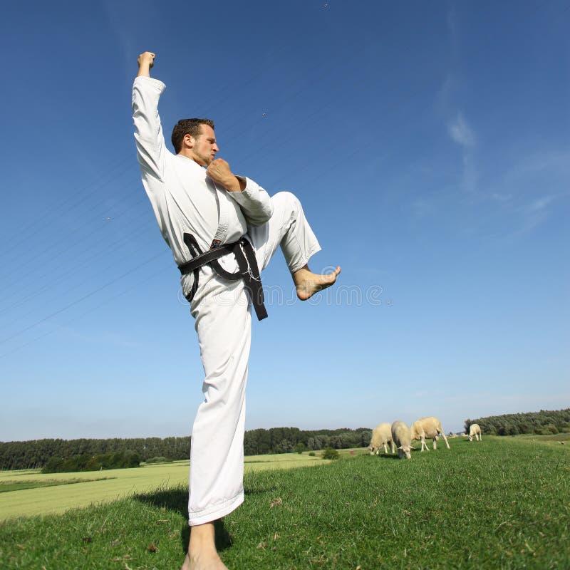 Kungfu imagens de stock royalty free
