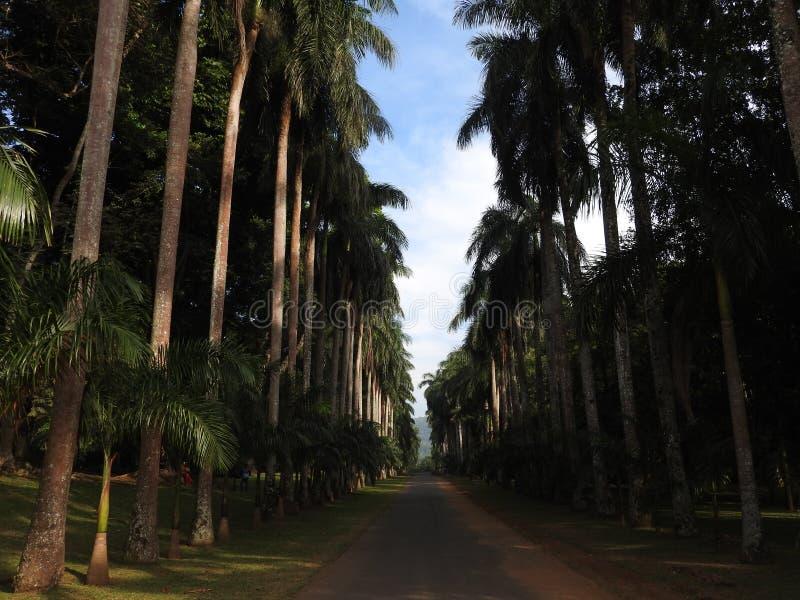 Kunglig botanisk trädgård i Kandy, Sri Lanka, grön flora på en klar solig dag royaltyfri foto