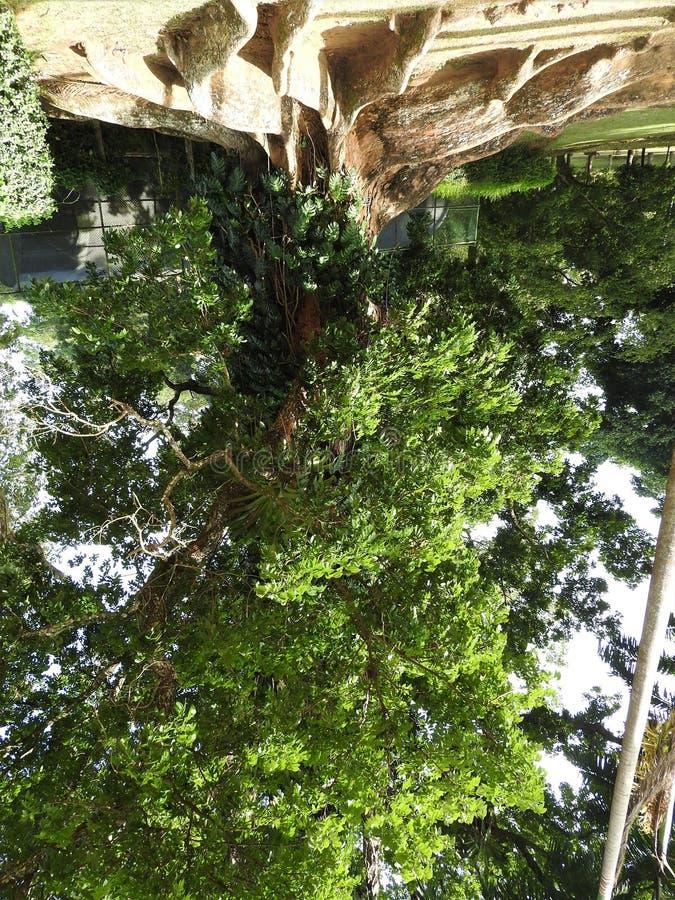 Kunglig botanisk trädgård i Kandy, Sri Lanka, grön flora på en klar solig dag fotografering för bildbyråer