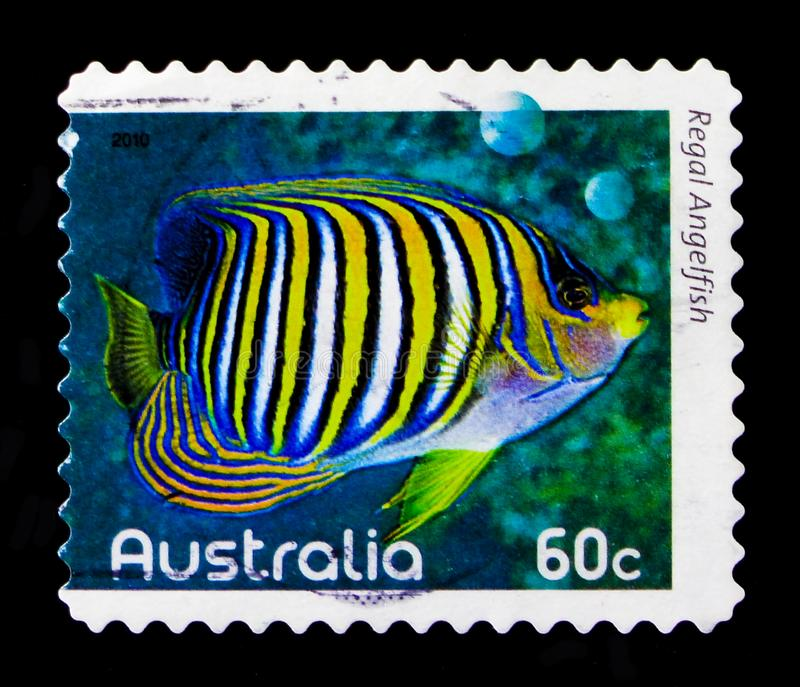 Kunglig havsängelPygoplites diacanthus, fiskar av revserien, circa 2010 royaltyfri foto