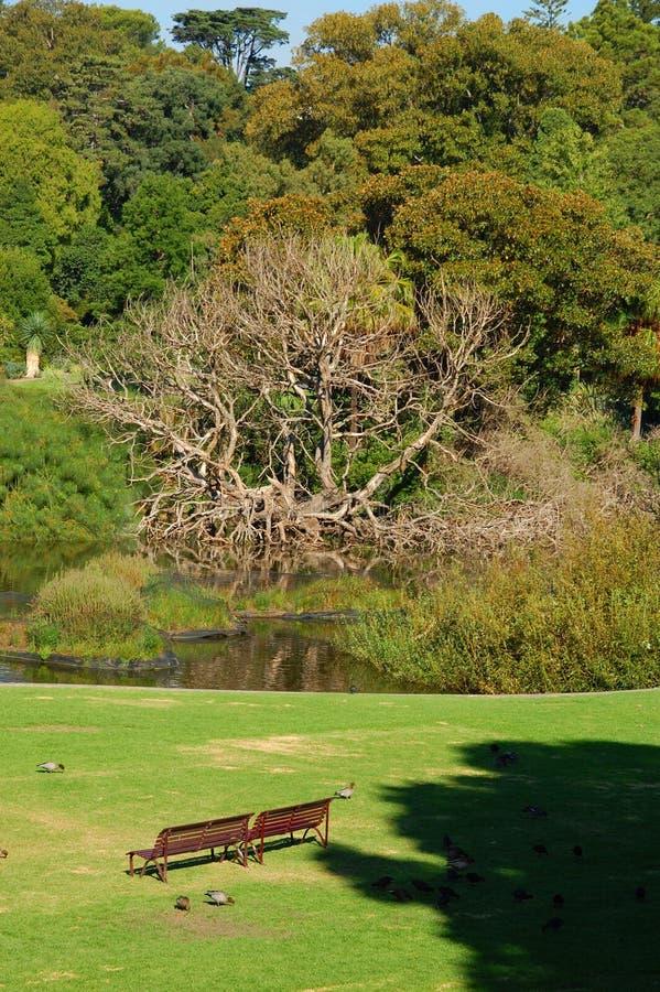 Kungliga botaniska trädgårdar, Melbourne, Victoria, Australien. royaltyfria bilder