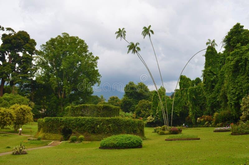 Kungliga botaniska trädgårdar, Sri Lanka royaltyfri fotografi