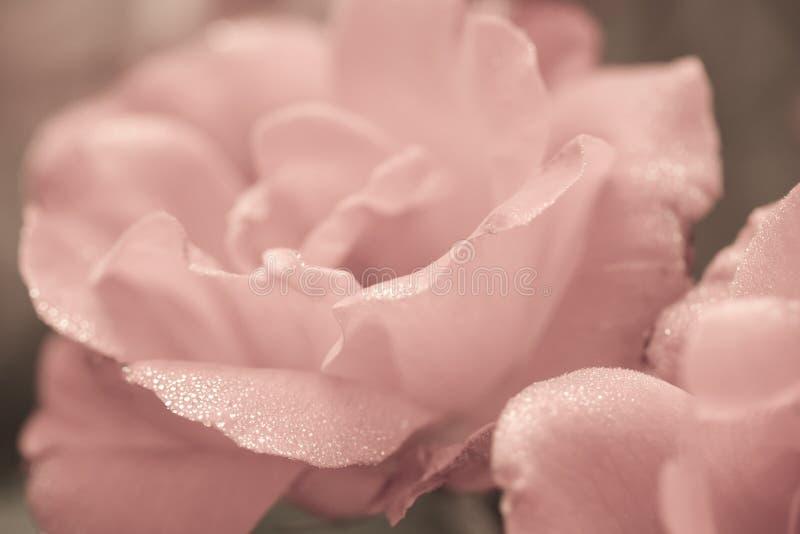 Kunst bloemenachtergrond met roze bloem royalty-vrije stock fotografie