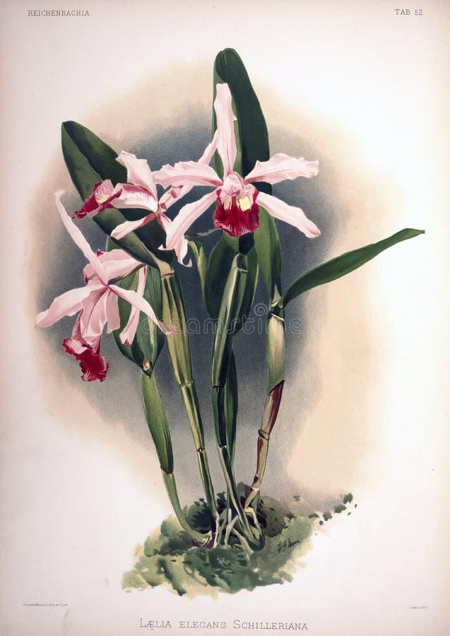 Kunstbeeld Illustratie op witte achtergrond stock fotografie
