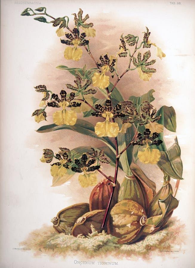 Kunstbeeld Illustratie op witte achtergrond royalty-vrije stock fotografie