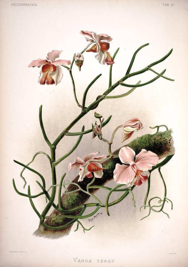 Kunstbeeld Illustratie op witte achtergrond royalty-vrije stock foto