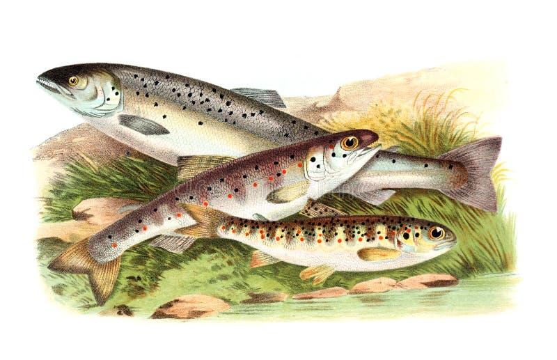 Kunstbeeld Illustratie op witte achtergrond stock illustratie