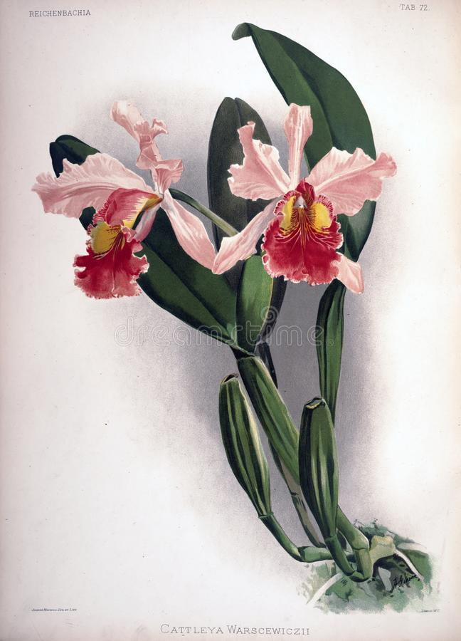 Kunstbild Abbildung auf weißem Hintergrund lizenzfreie stockfotografie