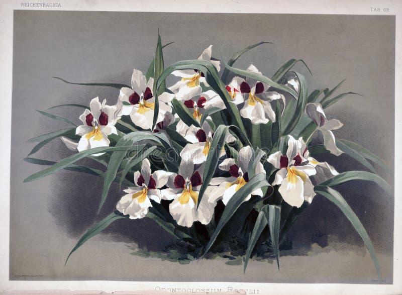 Kunstbild Abbildung auf weißem Hintergrund stockbilder