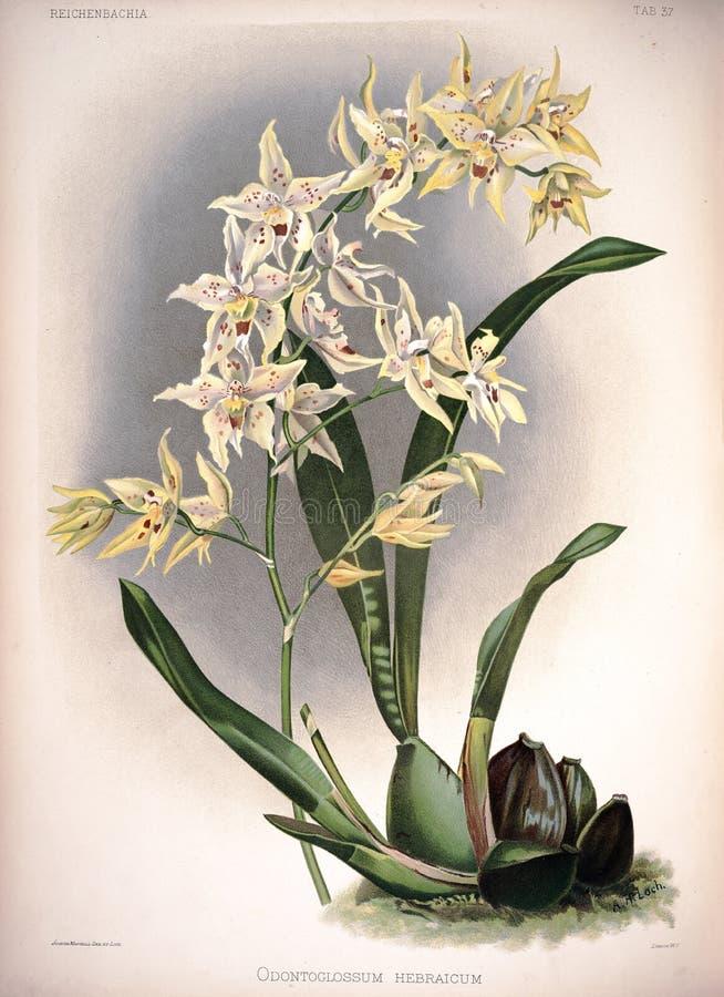 Kunstbild Abbildung auf weißem Hintergrund stockfotografie