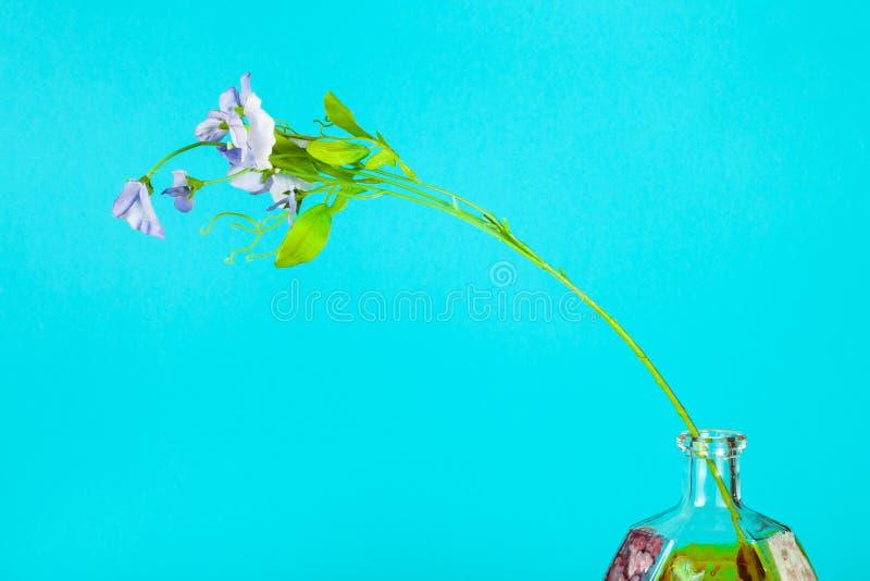 Kunstbloem in geverfde fles op aquamarine royalty-vrije stock afbeelding