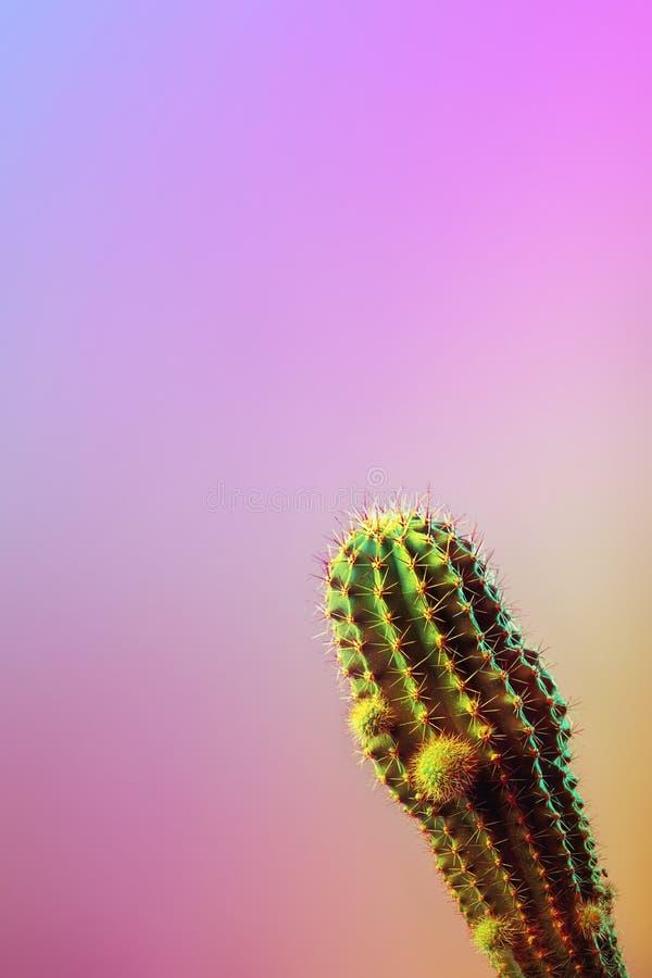 Kunstgalerie Mode-Design Minimales Stillife Modisches helles buntes Konzept auf rosa Neonhintergrund lizenzfreies stockfoto
