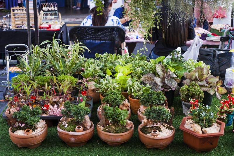 Kunstmatig klein bonsai en bamboe in pot voor verkoop royalty-vrije stock afbeeldingen