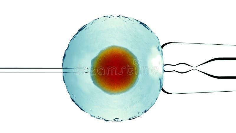 Kunstmatige bijgestane bemesting, Bevruchte cel, ovum Het kunstmatige enten Weergeven onder een microscoop wetenschap het 3d teru vector illustratie
