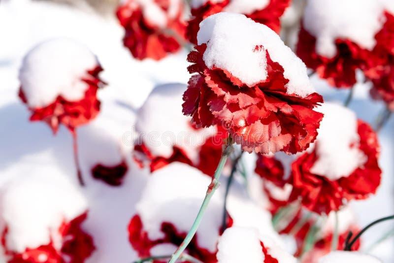 Kunstmatige die anjerbloemen met sneeuw in de winter in de begraafplaats worden behandeld stock foto