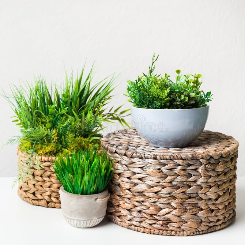 Kunstmatige grasrijke installaties in potten op rieten dozen over lichte muur stock foto's