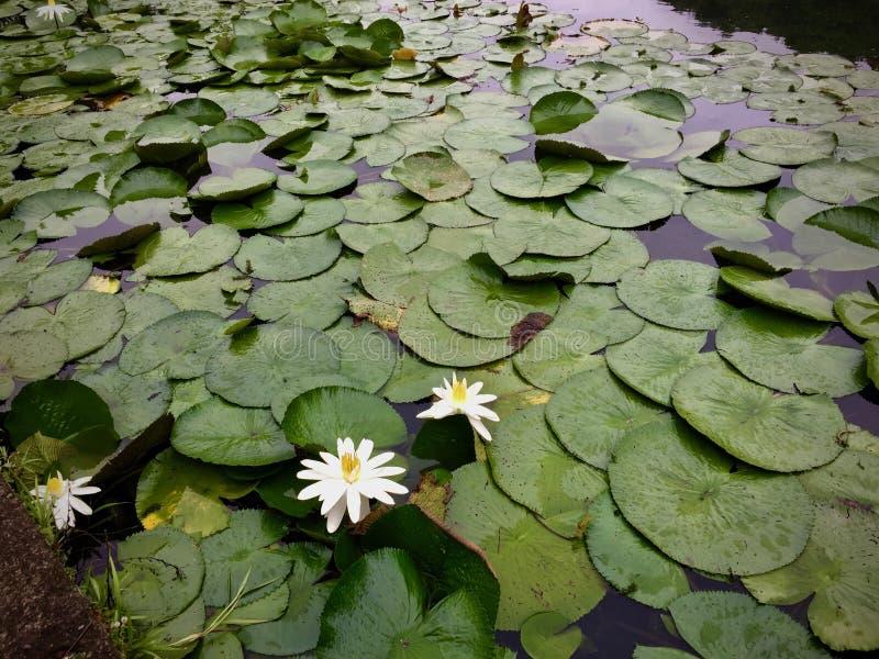 Kunstmatige lagune met partij van groen royalty-vrije stock afbeeldingen