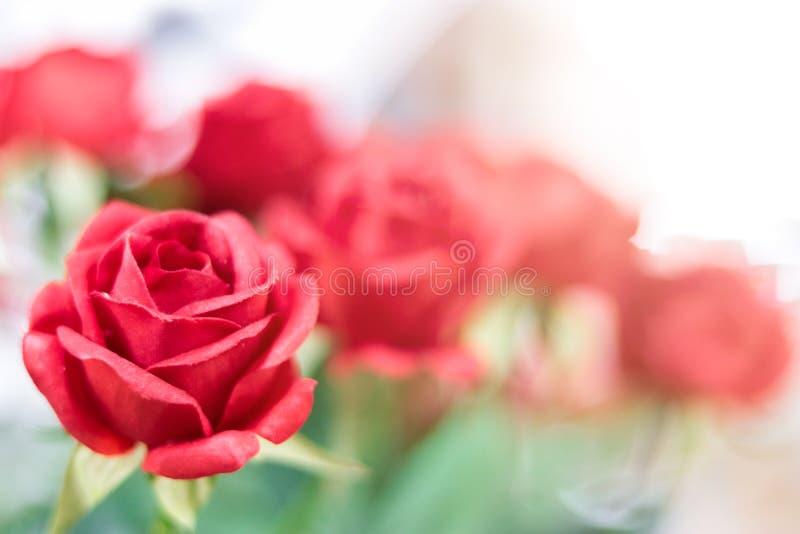Kunstmatige rode rozen op vage achtergrond stock afbeelding