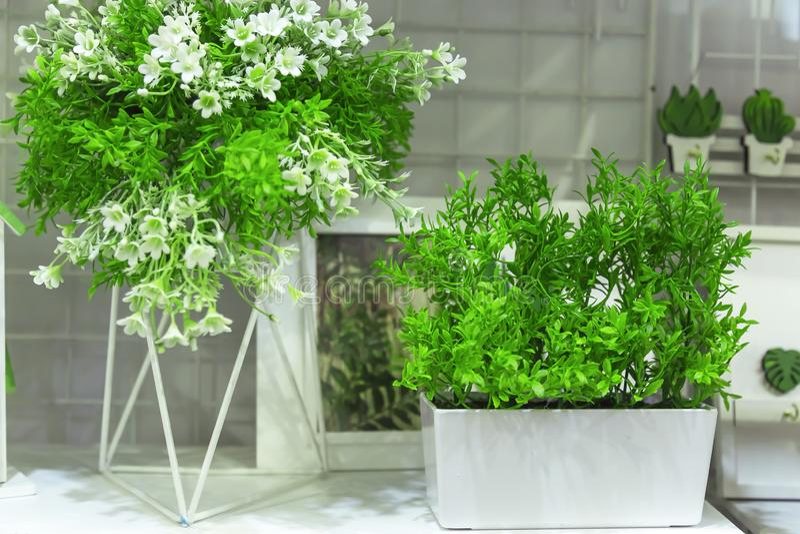 Kunstmatige sierplanten met kleine witte bloemen voor huis en tuindecor Details en elementen van decor en binnenland stock afbeeldingen