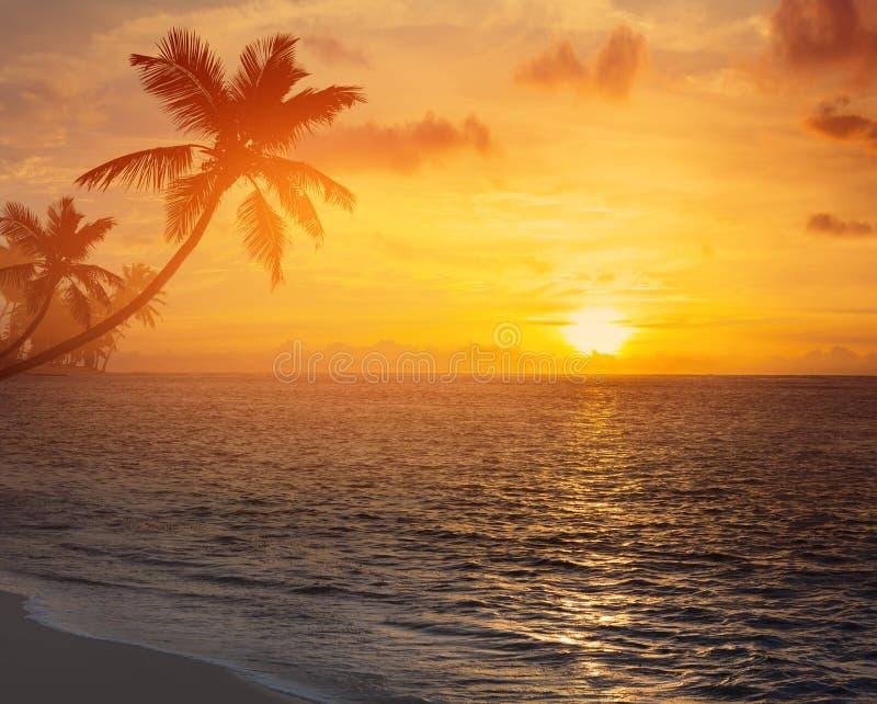 KunstPalmeschattenbild auf tropischem Strand des Sonnenuntergangs stockbilder