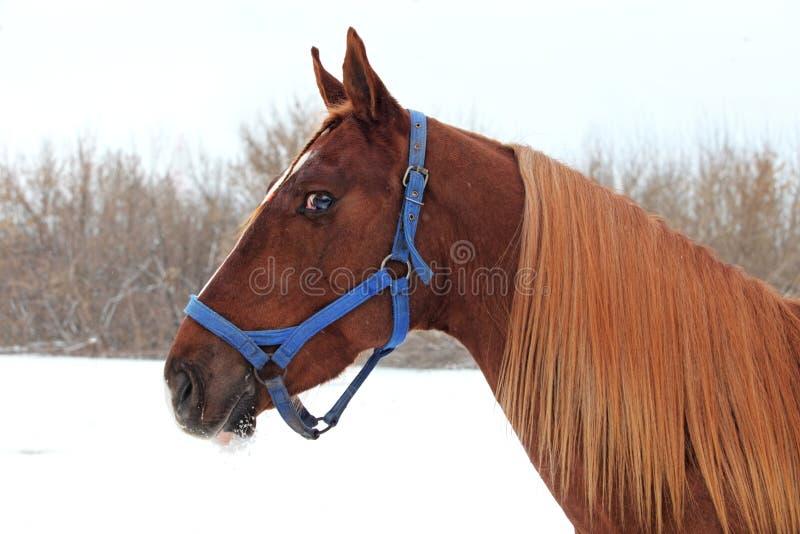 Kunstportret van mooi rassen sportief paard stock fotografie