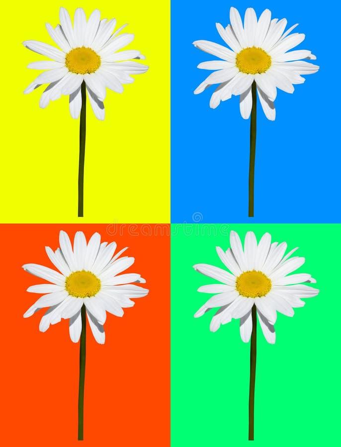 Kunstsamenstelling, madeliefje op vier gekleurde achtergrond wordt geïsoleerd die vector illustratie