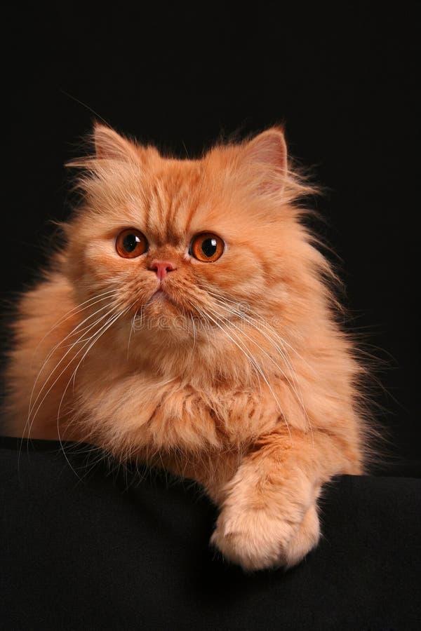 Kunstvolle Katze lizenzfreie stockfotografie