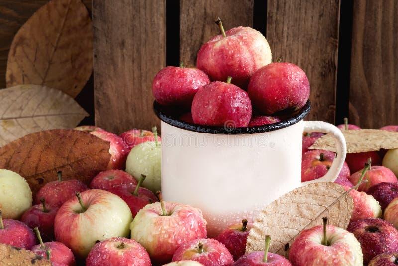 Kupa med härliga mogna äpplen för liten röd bakgrund för äpplehöstskörden arkivbilder