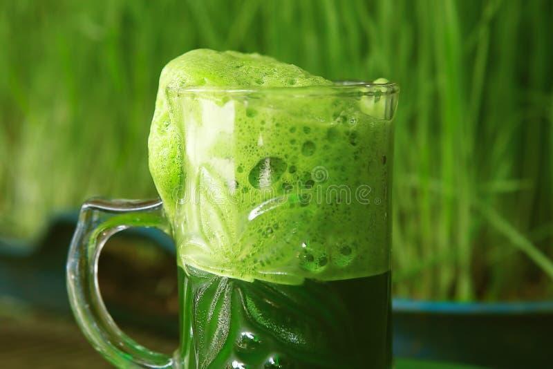 Kupa ny grön vetegräsfruktsaft - drink arkivbilder
