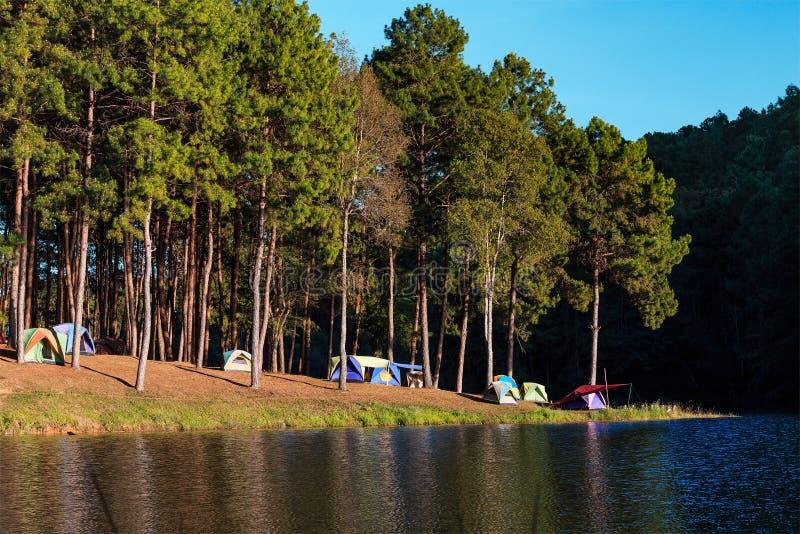 Kupoltält nära sjön och sörjer träd i campa plats på Pang Ung royaltyfri bild