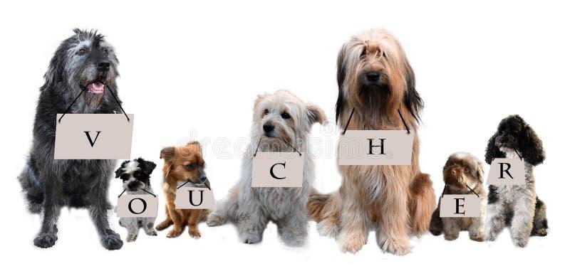 Kupong för en hundentusiast arkivbild