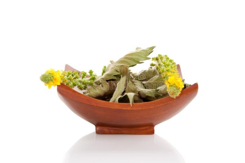 Kuracyjny Agrimonia eupatoriów kwiat w pucharze obrazy stock