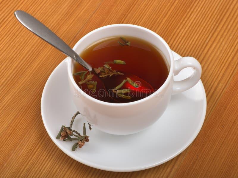 Kuracyjny herbaciany napój z Rododendronowym adamsii obraz royalty free